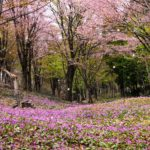 """Mishima town, """"Coming of late spring"""""""