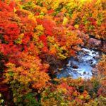 """Kosaka-town, """"Base town to enjoy autumn leaves"""""""