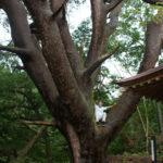 "Takko, ""Town of Big Trees"""