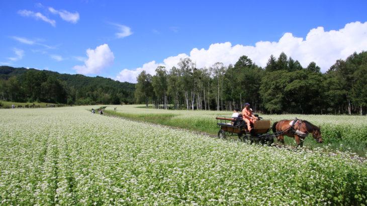 "Kiso town, ""Nostalgia and Nature"" (2) Nature"