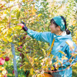 "Nakagawa Village, ""Fruits Paradise is here!"""