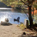 Iidate Village, Autumn leaves
